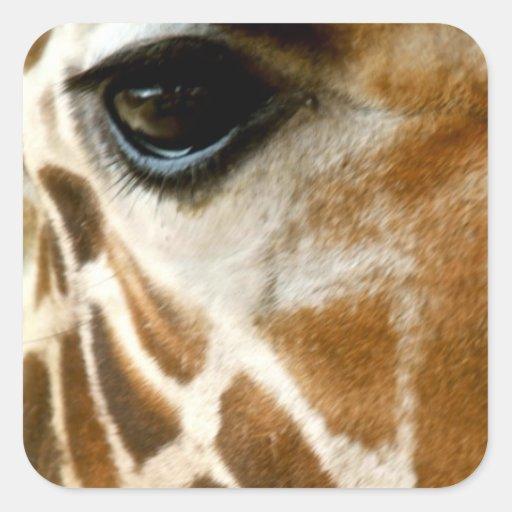 Foto de la naturaleza de animales salvajes de la calcomanías cuadradass personalizadas
