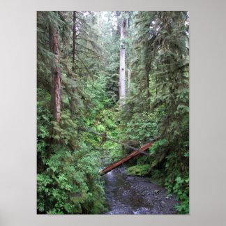 Foto de la naturaleza de la corriente del bosque póster