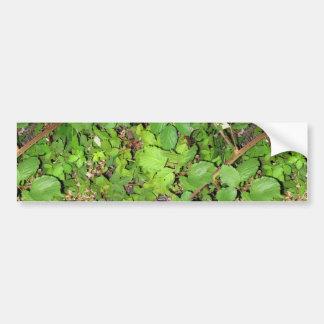 Foto de la naturaleza de las hojas de las bayas de pegatina de parachoque