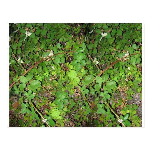 Foto de la naturaleza de las hojas de las bayas de postal