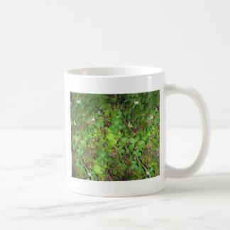Foto de la naturaleza de las hojas de las bayas de tazas de café