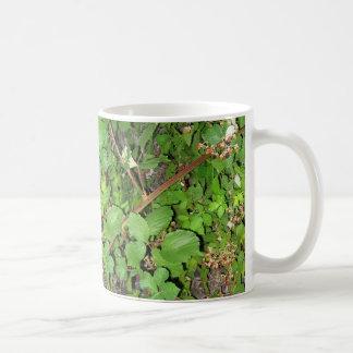 Foto de la naturaleza de las hojas de las bayas de taza clásica
