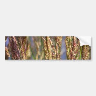 Foto de la naturaleza del primer de la hierba del etiqueta de parachoque