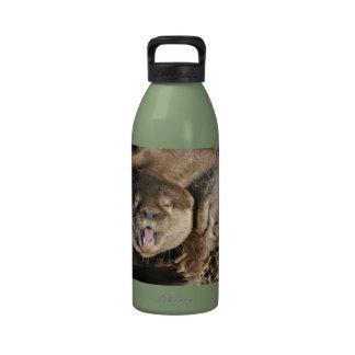 Foto de la nutria botellas de beber