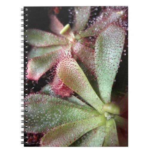 Foto de la planta de Sundew de Hamilton Cuadernos