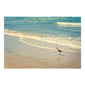 Foto de la playa con el pájaro