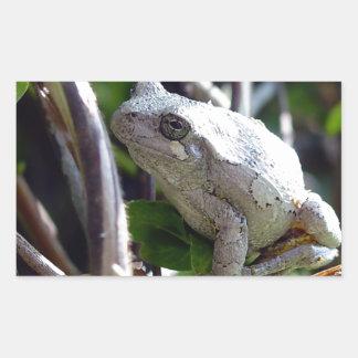 Foto de la rana arbórea por E.L.D. Rectangular Pegatina