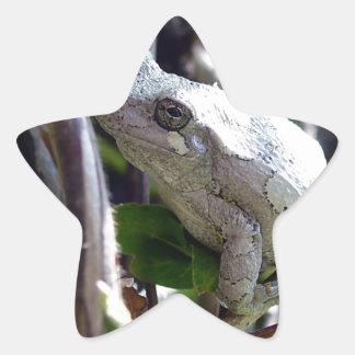 Foto de la rana arbórea por E.L.D. Colcomanias Forma De Estrellas