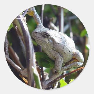 Foto de la rana arbórea por E.L.D. Etiquetas Redondas