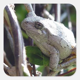 Foto de la rana arbórea por E.L.D. Pegatina Cuadrada