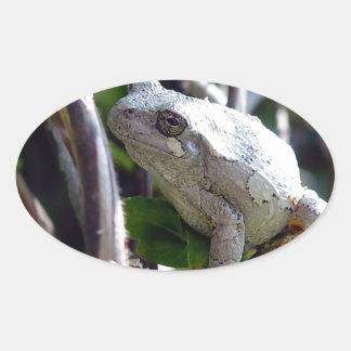 Foto de la rana arbórea por E.L.D. Pegatina Ovalada