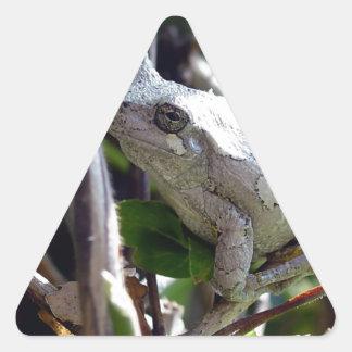 Foto de la rana arbórea por E.L.D. Pegatina Triangular
