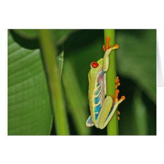 Foto de la rana arbórea felicitación