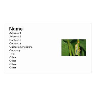 Foto de la rana arbórea tarjetas de visita