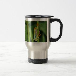 Foto de la rana arbórea tazas