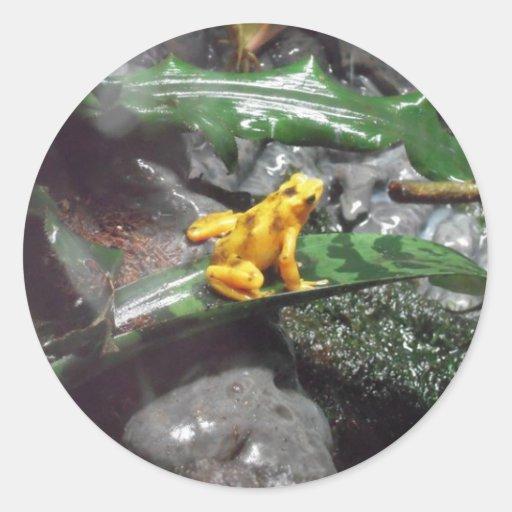 Foto de la rana del dardo del veneno etiquetas