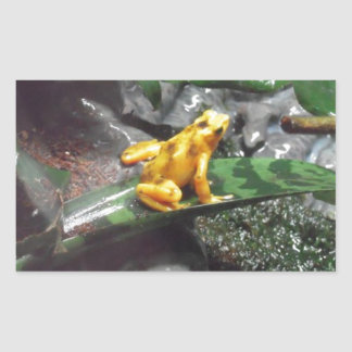 Foto de la rana del dardo del veneno pegatina rectangular