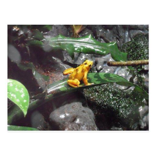 Foto de la rana del dardo del veneno postal