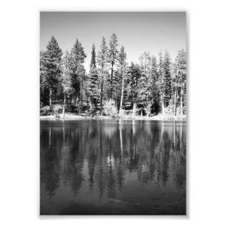 Foto de la reflexión de los pinos ponderosa cojinete