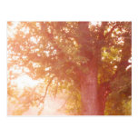 Foto de la salida del sol del árbol de arce de azú postales