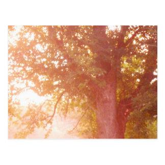 Foto de la salida del sol del árbol de arce de tarjeta postal