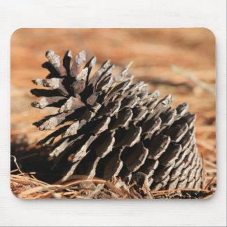 Foto de la semilla de pino en agujas rojas del inv alfombrilla de raton