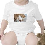 Foto de la siesta de la tarde del gatito camisetas
