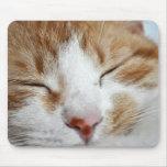 Foto de la siesta de la tarde del gatito alfombrillas de ratón