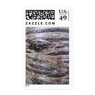 Foto de la textura de la corteza de árbol