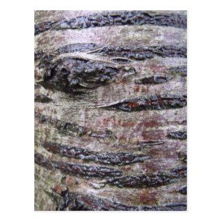 Foto de la textura de la corteza de árbol postal