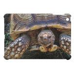 Foto de la tortuga iPad mini cobertura