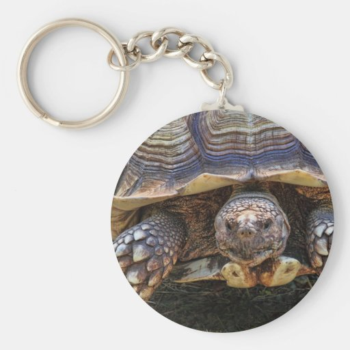 Foto de la tortuga llaveros