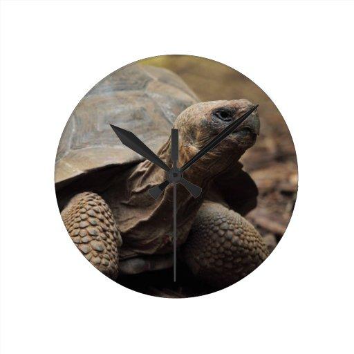 Foto de la tortuga relojes de pared