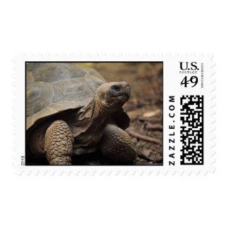 Foto de la tortuga sello