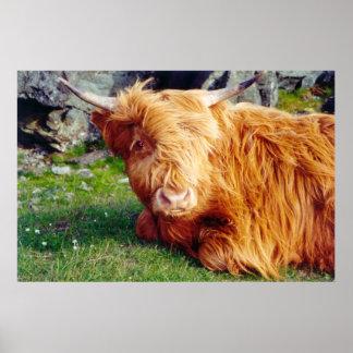 Foto de la vaca de la montaña póster