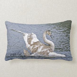Foto de las aves acuáticas de la fauna del cisne cojín