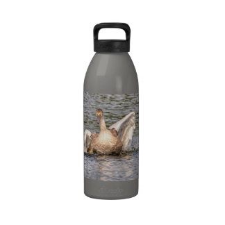 Foto de las aves acuáticas de la fauna del cisne m botella de agua reutilizable