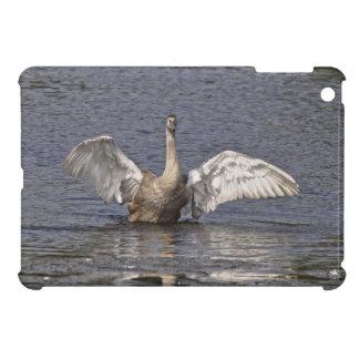 Foto de las aves acuáticas de la fauna del cisne m