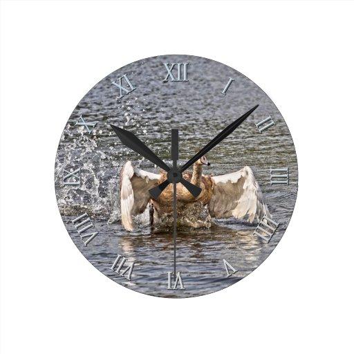 Foto de las aves acuáticas de la fauna del cisne m relojes de pared