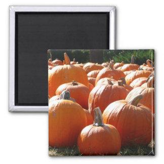 Foto de las calabazas para la caída, Halloween o Imán Cuadrado