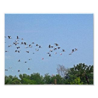 Foto de las cigüeñas de madera que vuela