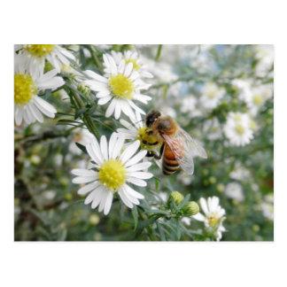 Foto de las margaritas de las flores de los postal