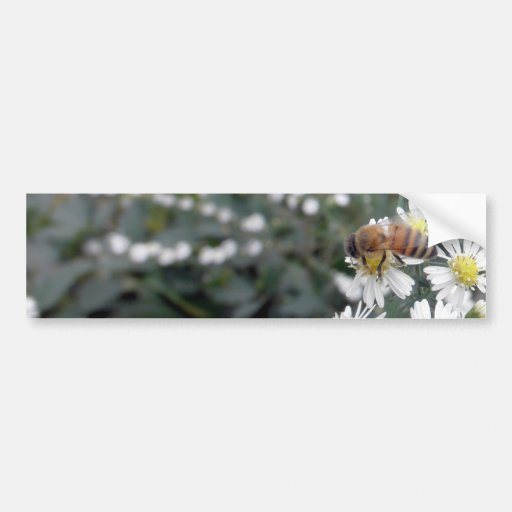 Foto de las margaritas de las flores de los Wildfl Pegatina De Parachoque