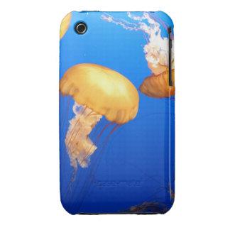 Foto de las medusas iPhone 3 protectores