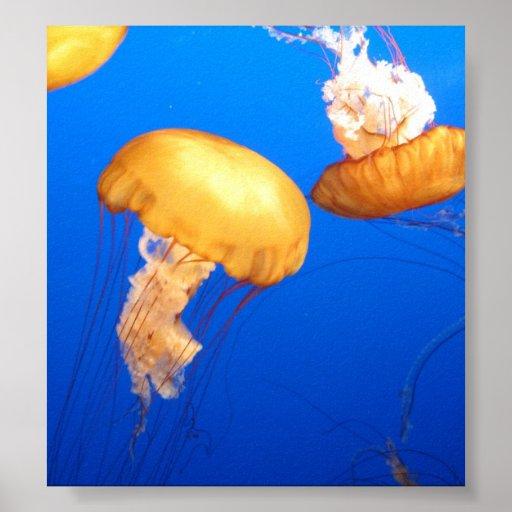 Foto de las medusas póster