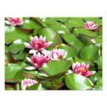 Foto de Lillies del agua