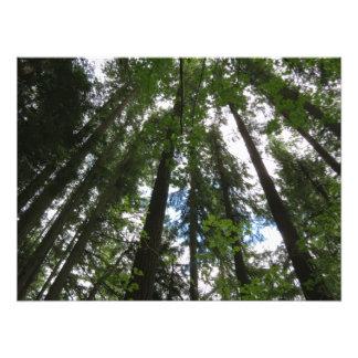 Foto de los árboles de arce y de los abetos de dou fotografía