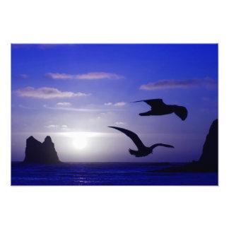 """foto """"de los azules dobles del pájaro"""" fotografía"""