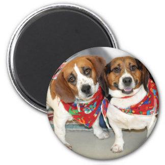 Foto de los beagles del refugio imán para frigorífico