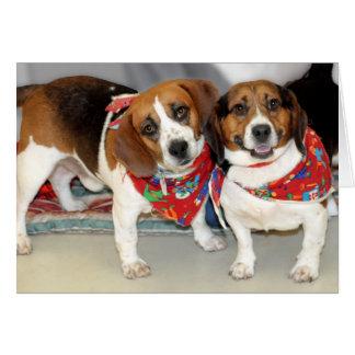 Foto de los beagles del refugio tarjeta de felicitación